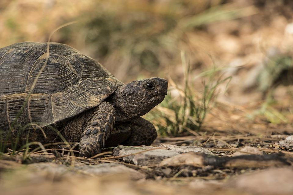 turtle-1309900_960_720